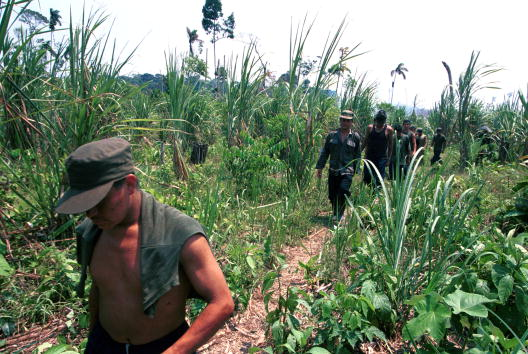 Sugar Cane「River Commerce In Colombia」:写真・画像(19)[壁紙.com]
