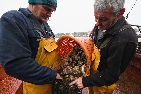 横位置「Scotland's Only Native Oyster Fisherman Lands His Catch」:写真・画像(10)[壁紙.com]