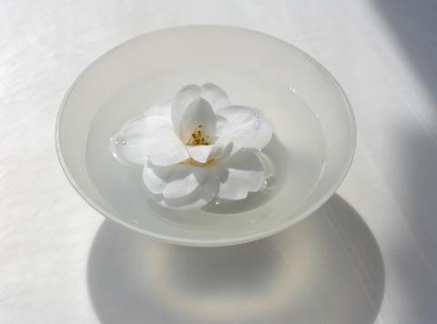Floating On Water「camellia flower floating in bowl」:スマホ壁紙(10)