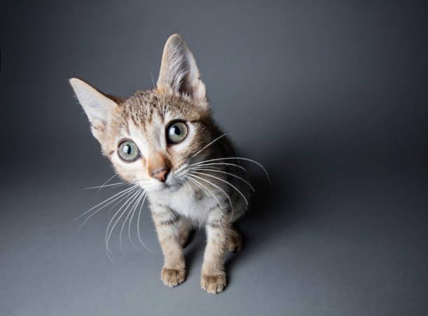 大きな目とら子猫:スマホ壁紙(壁紙.com)
