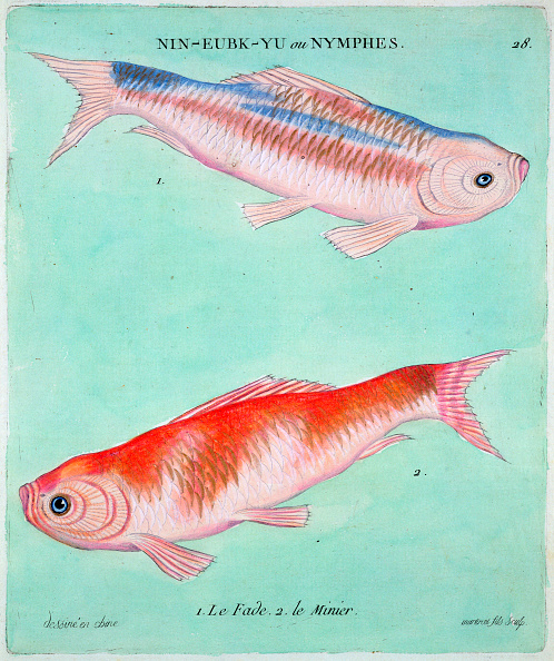 Carp「Chinese Goldfish 18th Century」:写真・画像(13)[壁紙.com]