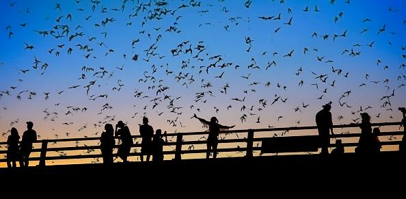 Music Festival「Flying bats in Austin」:スマホ壁紙(5)