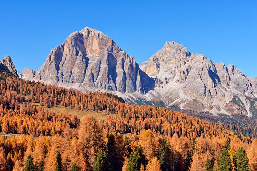European Larch「Tofana di Mezzo and Tofana di Roze, autumn」:スマホ壁紙(3)