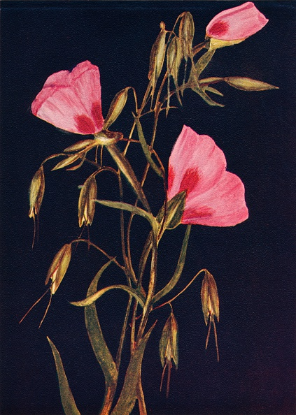 Bud「Farewell to Spring,  c1915, (1915)」:写真・画像(8)[壁紙.com]