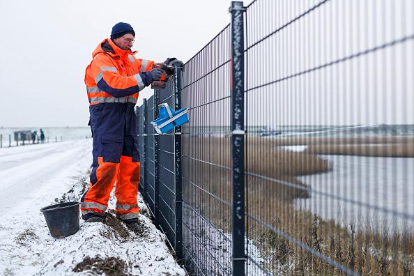 Wild Boar「Denmark Builds Border Fence To Keep Out Wild Boar」:写真・画像(9)[壁紙.com]