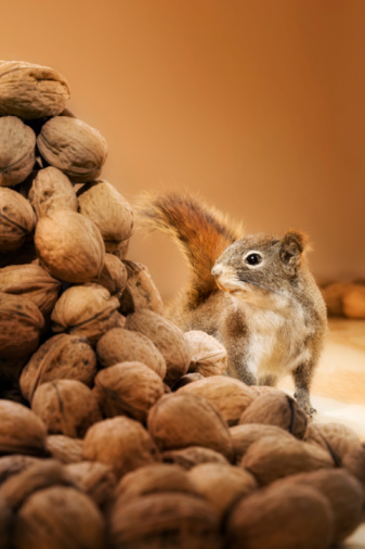 リス「Squirrel looking at a pile of nuts」:スマホ壁紙(18)