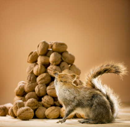 Squirrel「Squirrel looking at a pile of nuts」:スマホ壁紙(16)