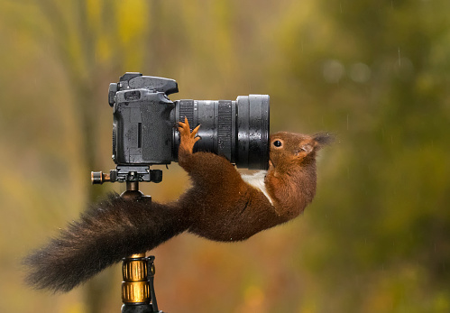 リス「Squirrel looking into the lens of a camera」:スマホ壁紙(18)