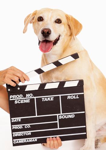 俳優「俳優犬」:スマホ壁紙(2)