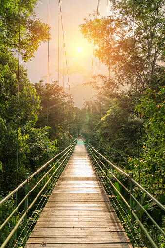 Suspension Bridge「Hanging Bridge in Tenorio Volcano National Park, Costa Rica」:スマホ壁紙(7)