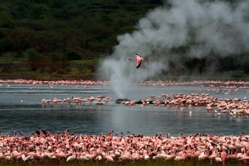 Lake Bogoria National Park「Flamingos at Lake Bogoria」:スマホ壁紙(15)