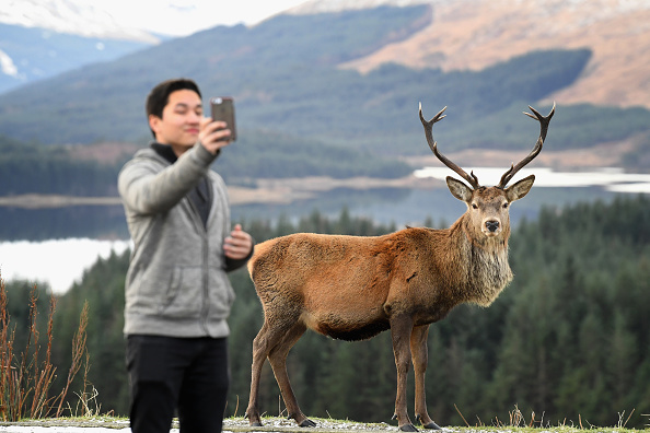 Stag「Winter Scenes In Glen Coe」:写真・画像(5)[壁紙.com]
