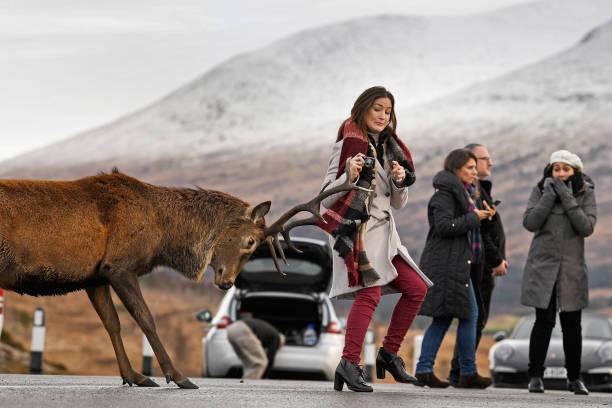Jeff J Mitchell「Winter Scenes In Glen Coe」:写真・画像(5)[壁紙.com]