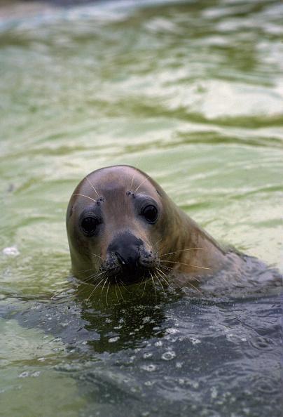 Animal Whisker「Seal, Sanctuary, Cornwall, UK」:写真・画像(12)[壁紙.com]