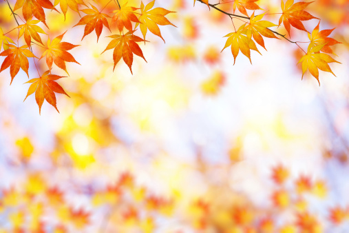 かえでの葉「秋のフレーム」:スマホ壁紙(4)