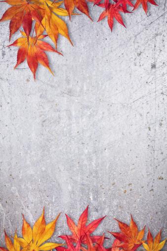 かえでの葉「秋のフレーム」:スマホ壁紙(1)