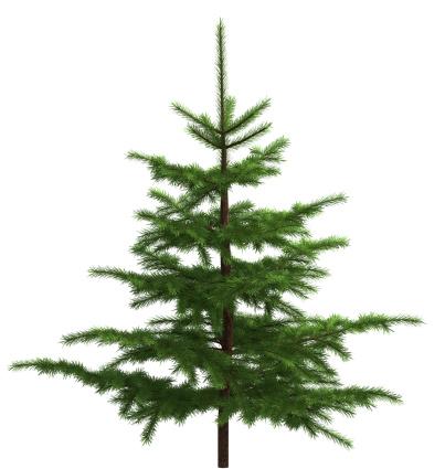 Branch - Plant Part「Small spruce」:スマホ壁紙(16)