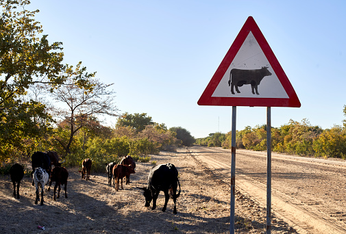 Caprivi Strip「Beware of cow signs by dirt road against clear sky at Caprivi Strip, Namibia」:スマホ壁紙(11)