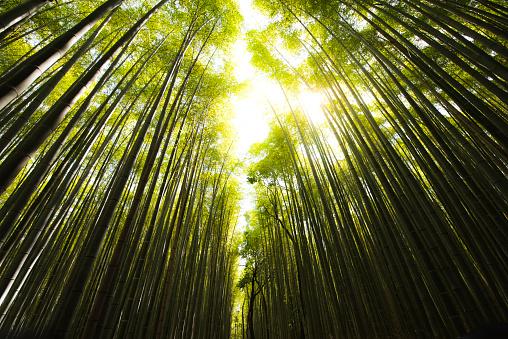 里山「竹」:スマホ壁紙(18)