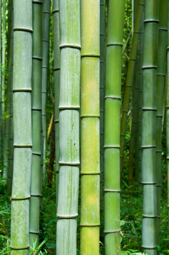 Bamboo - Material「Bamboo」:スマホ壁紙(6)