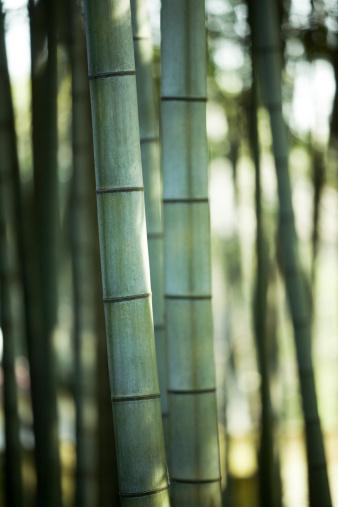 戦国武将「竹」:スマホ壁紙(4)