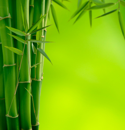 Feng Shui「Bamboo」:スマホ壁紙(16)