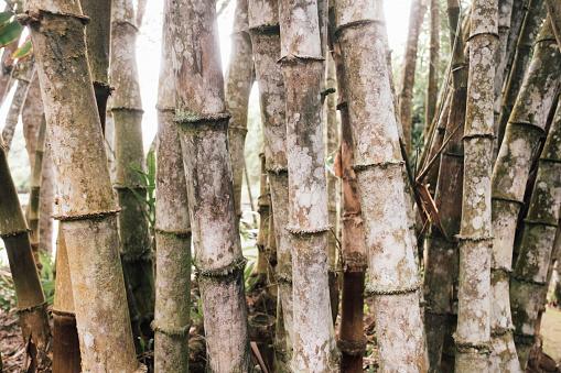 竹「bamboo」:スマホ壁紙(9)