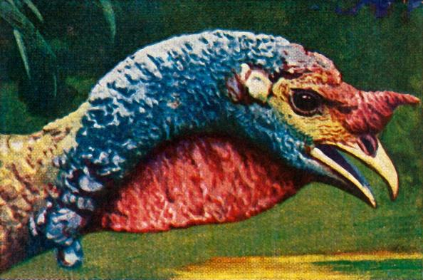 Beak「Turkey」:写真・画像(19)[壁紙.com]
