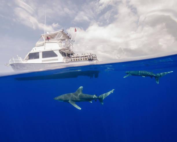 Two oceanic whitetip sharks swim under a boat at Cat Island in the Bahamas.:スマホ壁紙(壁紙.com)