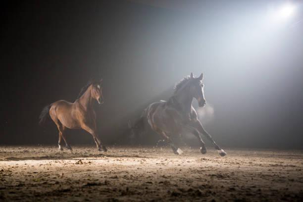 Two horses galloping:スマホ壁紙(壁紙.com)