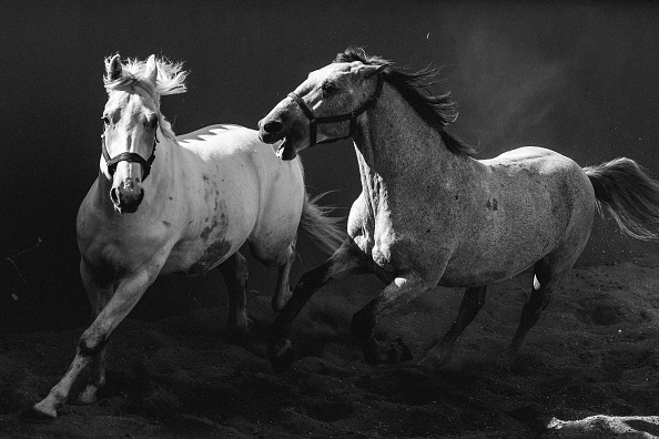 Horse「Fiaker Horses Penned Following Coronavirus Restrictions」:写真・画像(16)[壁紙.com]