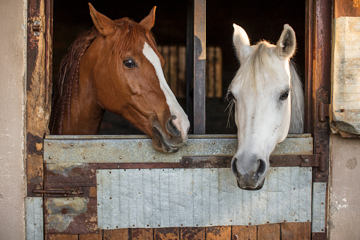 Horse「Two horses on a farm in stable」:スマホ壁紙(6)
