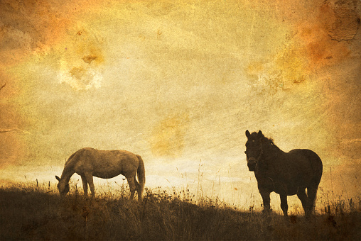 Auto Post Production Filter「Two Horses Standing in Field During Sunset, Textured」:スマホ壁紙(6)