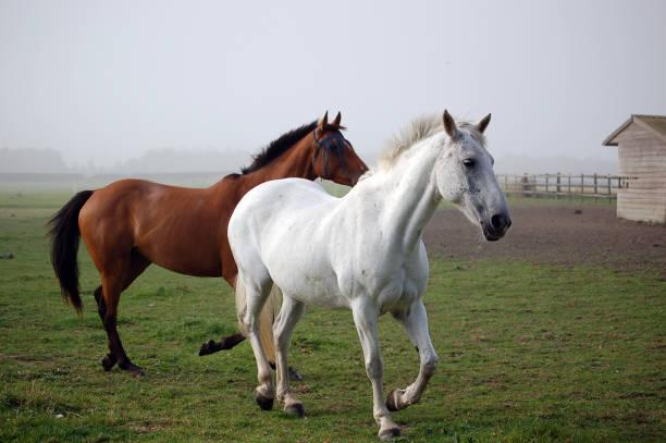 Two Horses trot out of the fog:スマホ壁紙(壁紙.com)