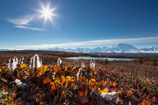 Alaska Range「USA, Alaska, Willow tree in autumn with Mount Mckinley at Denali National Park」:スマホ壁紙(7)