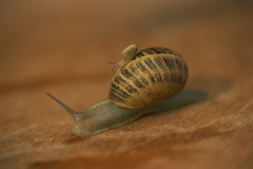snails「Snail with shell」:スマホ壁紙(15)