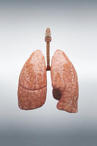 Tar「Human lung」:スマホ壁紙(18)