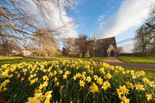 水仙「Daffodils In Bloom With St. Mary The Virgin Church In The Background」:スマホ壁紙(11)