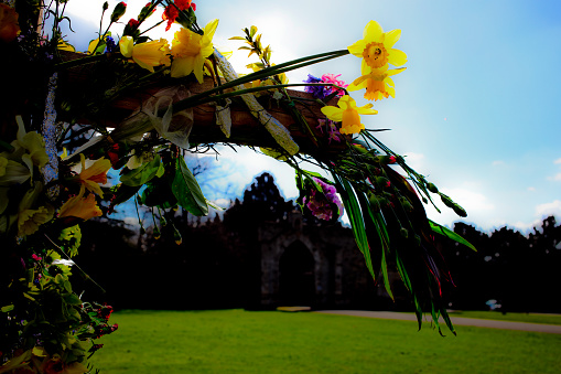 マン島「Daffodils in Spring」:スマホ壁紙(4)