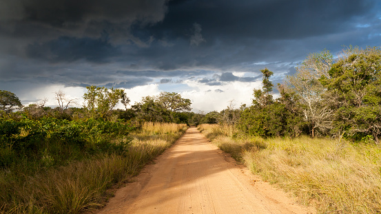 Empty Road「Empty dirt road, Kruger National Park, Mpumalanga, South Africa」:スマホ壁紙(14)