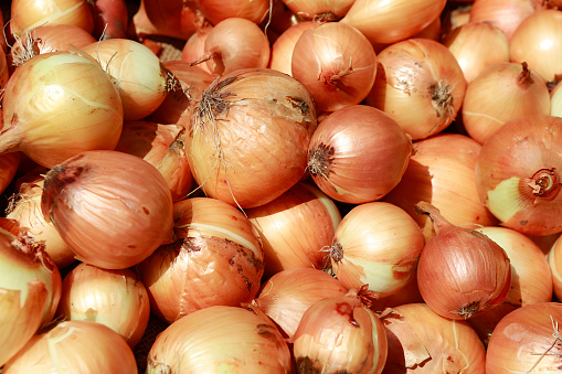 Onion「yellow onions for sale at the South Station produce market in Boston, Massachusetts」:スマホ壁紙(17)