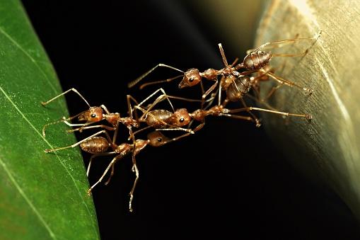 Effort「Ant bridge (ants crossing to other side in harmony)」:スマホ壁紙(18)