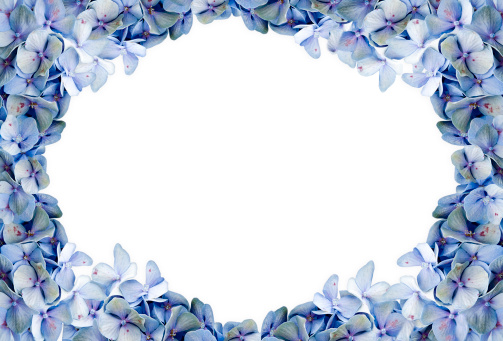 Hydrangea「Blue Hydrangea Framed Background」:スマホ壁紙(19)