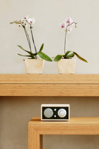 Electrical Equipment「Two potted orchids in front of wall on shelf」:スマホ壁紙(7)