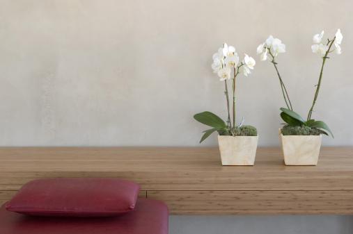 棚「two potted orchids on a shelf in front of a wall with red couch」:スマホ壁紙(6)