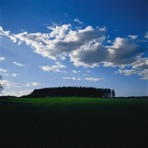 Selective Focus「Grove at the horizon with meadows in the foreground and clouds in the sky, Waldviertel, Austria, Photograph, Around 2004」:写真・画像(15)[壁紙.com]