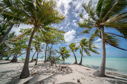 Pacific Islands「Fakarava Atoll Teahatea Motu Islet French Polynesia」:スマホ壁紙(15)