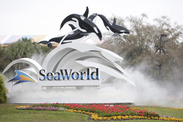フロリダ州オーランド「Killer Whale Kills Trainer Before Show At SeaWorld」:写真・画像(13)[壁紙.com]