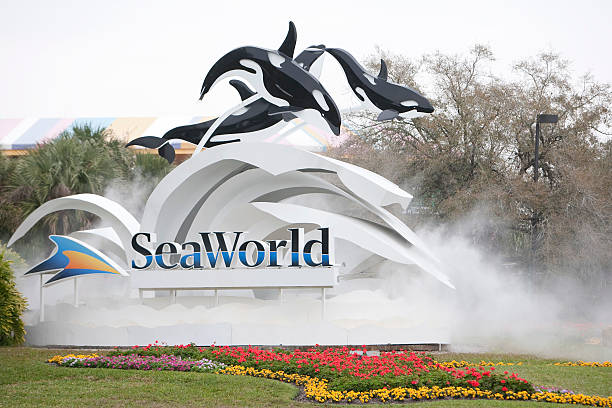 Killer Whale Kills Trainer Before Show At SeaWorld:ニュース(壁紙.com)