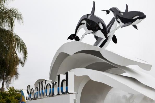 Killer Whale「Killer Whale Kills Trainer Before Show At SeaWorld」:写真・画像(19)[壁紙.com]